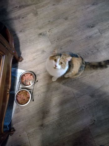 please....... EyeEm Selects Pets Domestic Cat Feline High Angle View Animal Themes Cat At Home