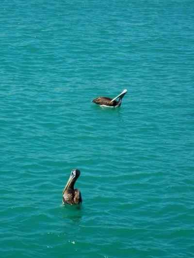 Piura Playa Paisaje Natural Peru Animal Themes Sea Water Bird