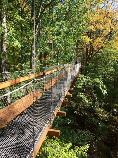 Tree Nature Outdoors Day Railing Beauty In Nature Tranquility Forest Tranquil Scene Growth No People Bridge - Man Made Structure Footbridge Scenics Bridge Holden Arboretum Canopy Canopy Walk Fall Leaves Fall
