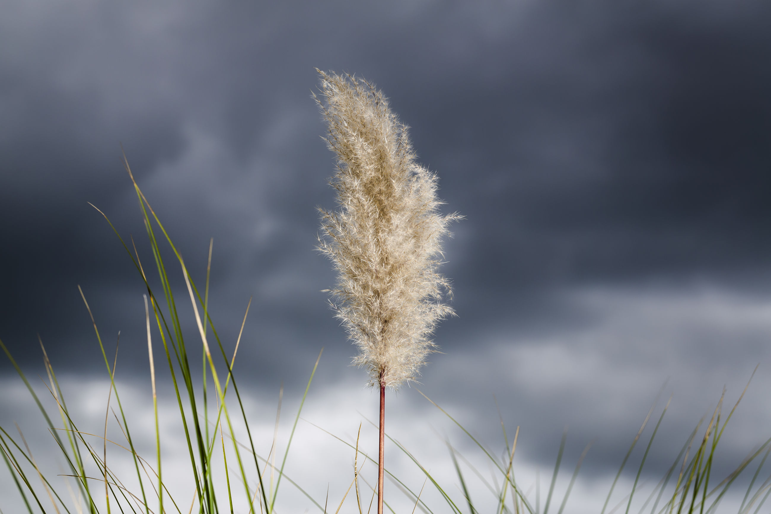 nature, plant, growth, focus on foreground, beauty in nature, no people, day, grass, outdoors, close-up, sky, fragility, freshness