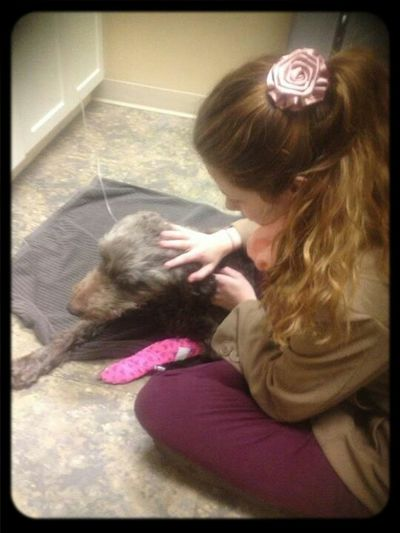 when my girl was sick :( Trooper Aussiedoodle MyGIRL Toughpup