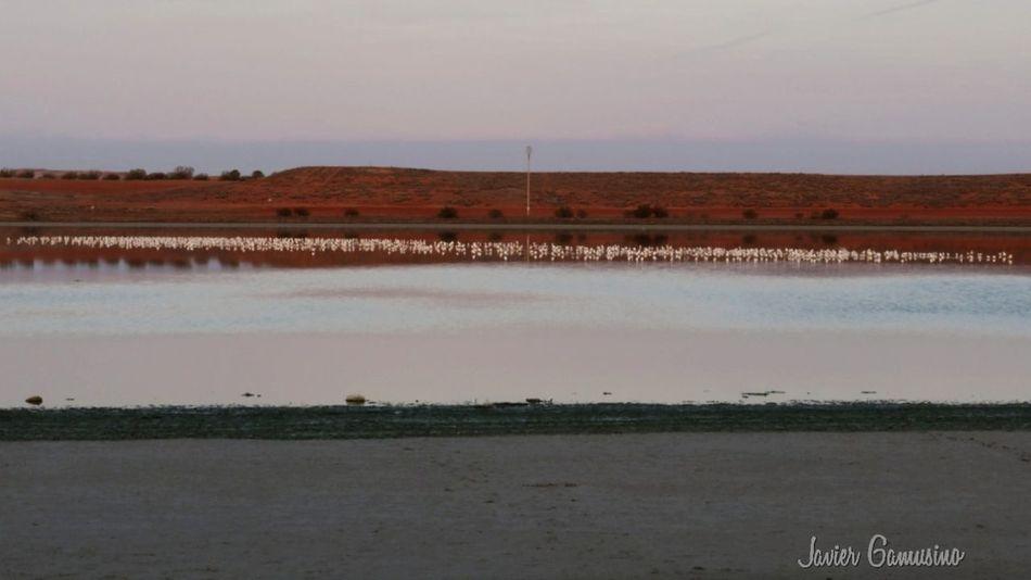 lagunas Water Agriculture Reflection Lake Salt Basin Landscape Nature Outdoors Reflecting Pool Salt - Mineral