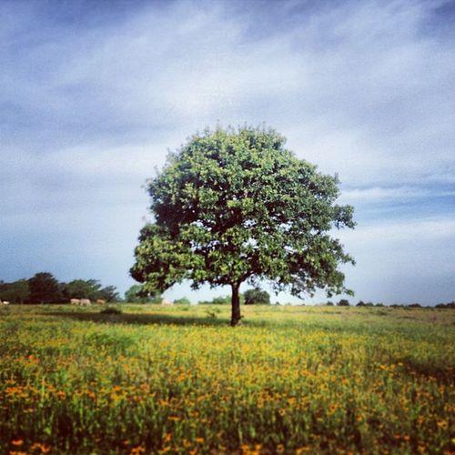 Lone Tree 30