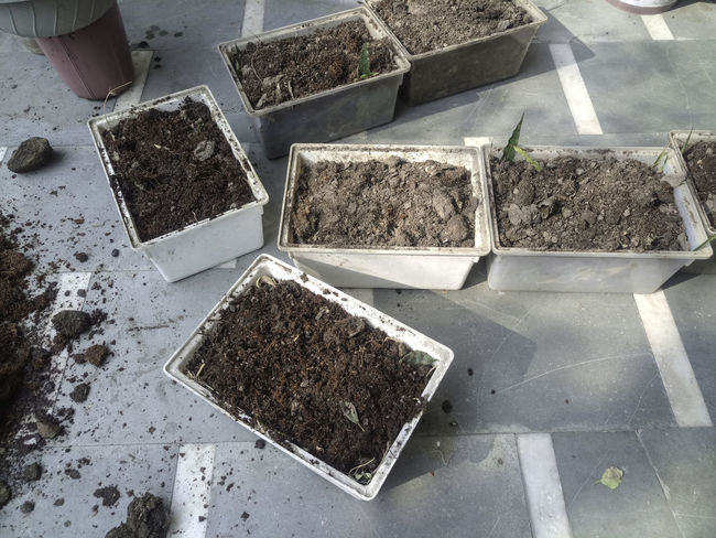 Plastic planters filled with a potting mix to be a part of an organic kitchen garden. These are rectangular white plastic pots, containing a potting mix that contains dried cowdung, soil, bone meal, home made compost and cocopeat. At the bottom of this planter is leaves and other residue from previously grown plants. Buckets Filling Planters Full Planters Full Pots Gardening Making Potting Mix Making Soil Mixing Potting Mix Potting Mix Bucket Garden Mixing Ingredients Organic Garden Organic Gardening Plastic Buckets Pot Soil