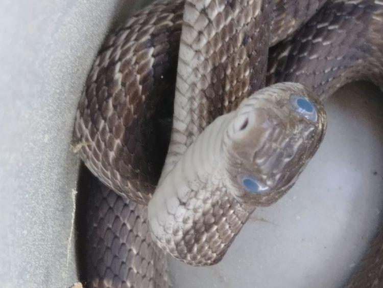 Oaksnake Snake Closeup Sea Life UnderSea Fish Sand Seashell Close-up