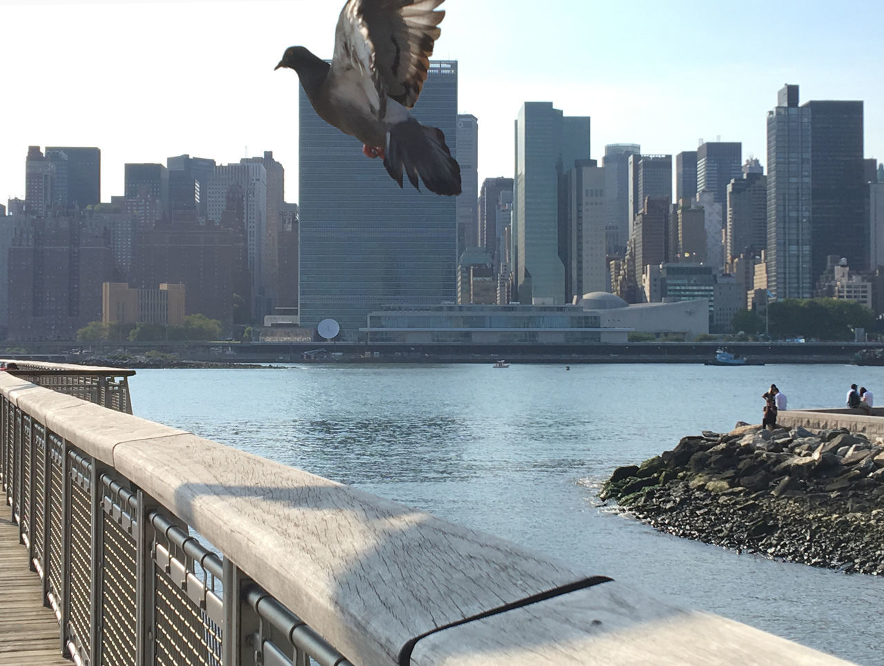 architecture, building exterior, built structure, water, city, skyscraper, day, outdoors, mid-air, real people, urban skyline, men, sea, sky, clear sky, cityscape, nature, one person, full length, spread wings, bird, people