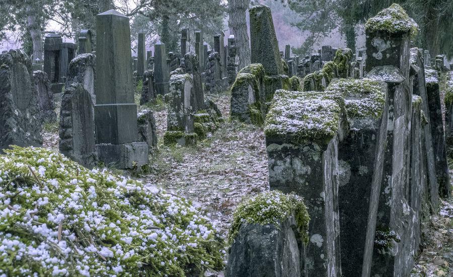 Jewish Cemetery Cemetery Day Gravestone Graveyard Jewish Cemetery Memorial No People Outdoors Plant Snow Tombstone Tree
