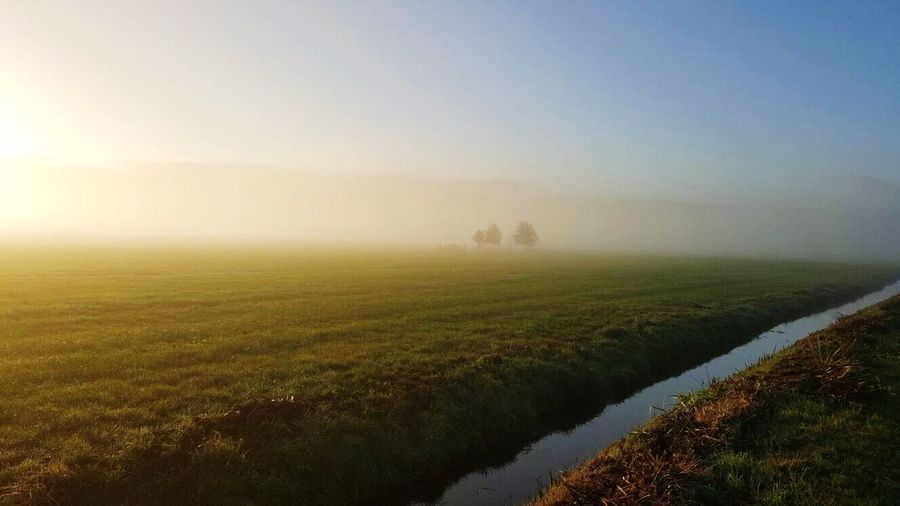 Nature Beauty In Nature Tranquility Tranquil Scene Scenics Landscape Field Clear Sky Sunlight Sky No People Outdoors Grass Day Tree Agriculture Netherlands Nature Photography Misty Morning Foggy Morning Good Morning End Of Summer Its My Life Tired Of