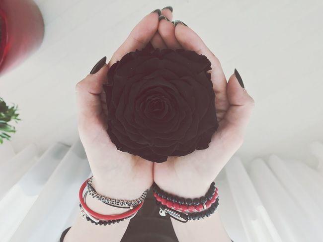 Blackrose Immortal Petals Flower Love