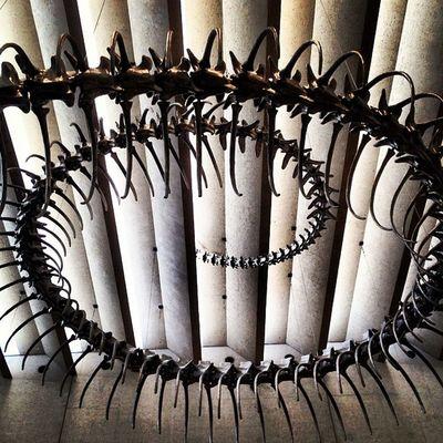 Ressort 2012 by Huang Yong Ping Snake Skeleton Sculpture Apt7 Goma Brisbane