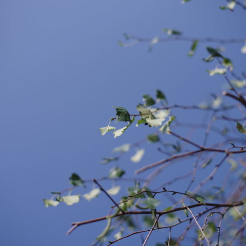 Sky Growth Plant Nature Low Angle View Beauty In Nature Blue Tree Clear Sky No People Day Branch Focus On Foreground Leaf Plant Part Outdoors Tranquility Selective Focus Close-up Animals In The Wild Spring