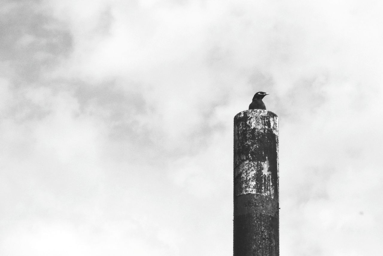bird, perching, animals in the wild, low angle view, outdoors, sky, one animal, day, animal themes, animal wildlife, no people, nature