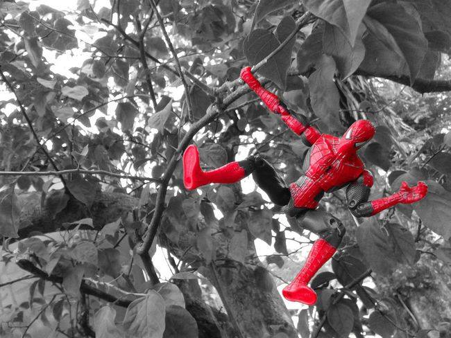 hang on! Spiderman Tree Still Life Toy