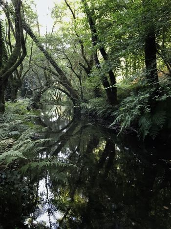Outdoors Growth Tranquility Beauty In Nature Forest Day Tranquil Scene River Reflections Green