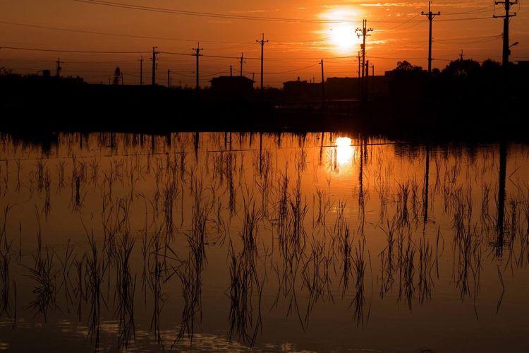 Reeds In Lake During Sunset