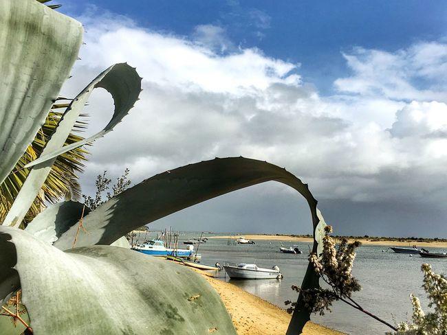 Generous frame Taking Photos Sunset #sun #clouds #skylovers #sky #nature #beautifulinnature #naturalbeauty #photography #landscape Boats Sunshine Shore Shoreline Cactus Cactusflower Sand m