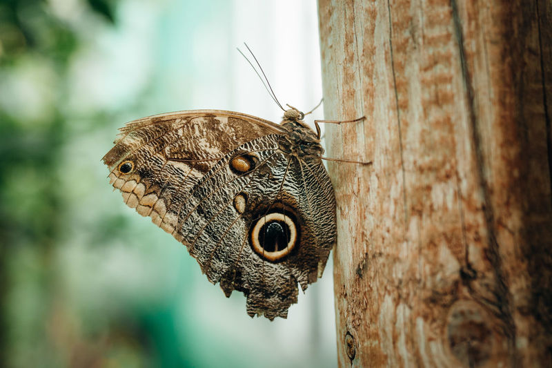 Animal Wildlife Portrait Nature Animals In The Wild Beauty In Nature Animal Themes Close-up Outdoors Photograph No People Transylvania Butterfly Insect