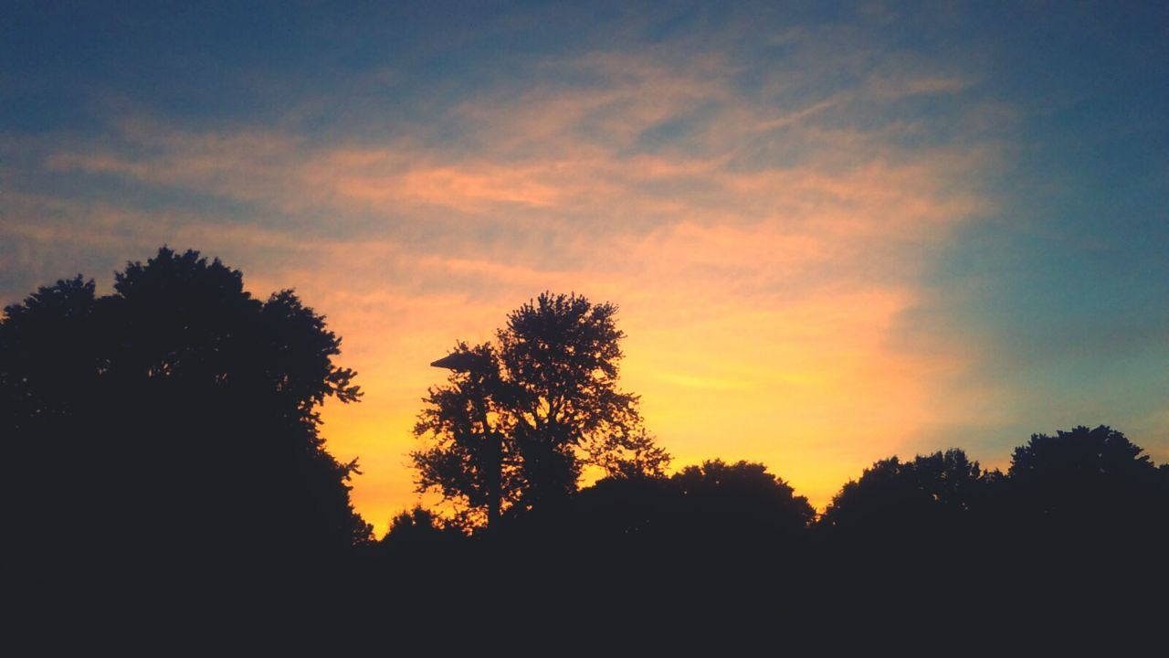 silhouette, tree, sunset, nature, beauty in nature, sky, scenics, no people, tranquility, forest, outdoors