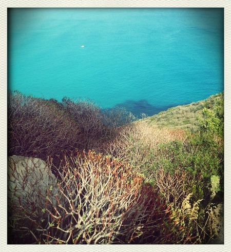 Sea Shades Of Green  Nature