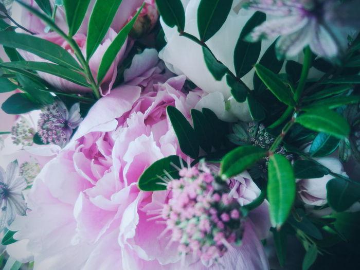 Flowers ❤ Flower Nature Beauty In Nature Freshness Peony  Pink Color Leaf Flower Head EyeEm Best Edits EyeEm Best Shots VSCO Springtime Peony Flower