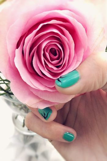 Millennial Pink Rose - Flower Rosa Rosen Pink Color Flower Human Hand Fingernails Beauty Lifestyles Fashion Nailsart Freshness Flower Head Nature Rosa EyeEm Best Shots Freshness One Flower One Rose Hand Pink Rose EyeEm Gallery Eyeem Market Close-up Beautiful