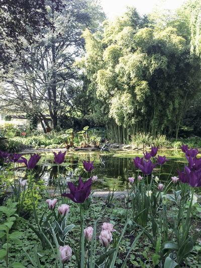 Purple flowers blooming in park