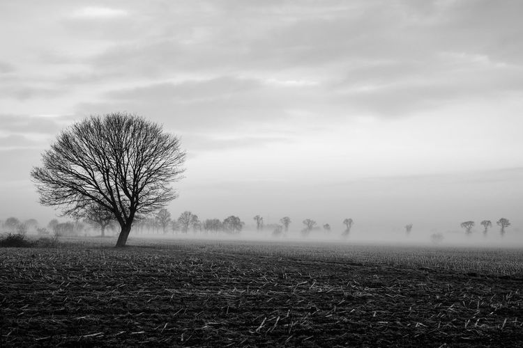 Lonely bare tree in a countryside morning landscape In Black and white Bare Tree Beauty In Nature Cloud - Sky Day Environment Field Fog Hazy  Isolated Land Landscape Nature No People Non-urban Scene Outdoors Plant Remote Scenics - Nature Sky Tranquil Scene Tranquility Tree