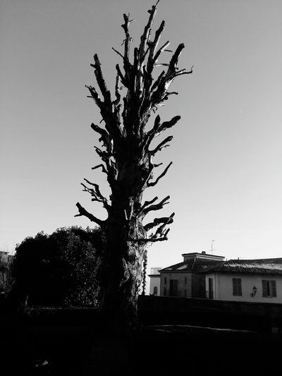 Tree No People Sky Day Bare Tree Outdoors Govone Piemonte Govone  Govone (CN) Piedmont Italy Piemonte