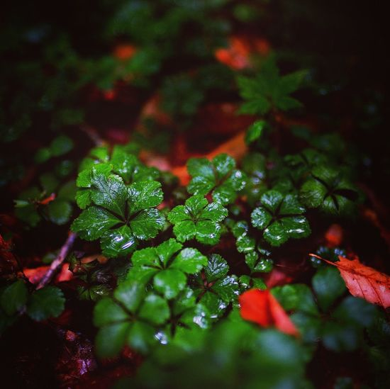 XF16mmF1.4 Xpro1 Instagram Edit Plant Growth Green Color Selective Focus Close-up Plant Part Leaf Nature