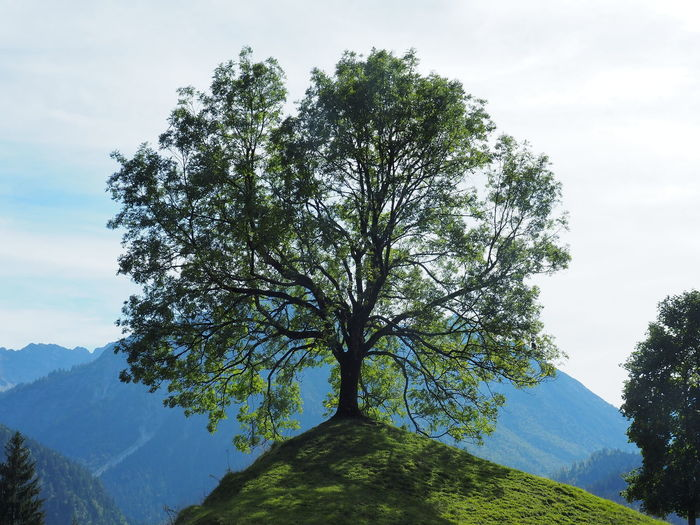 Allgäu Allgäuer Landschaft Beauty In Nature Cloud - Sky Day Green Color Growth Idyllic Land Landscape Mountain Nature No People Non-urban Scene Outdoors Plant Scenics - Nature Sky Tranquil Scene Tranquility Tree