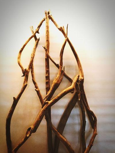 twigs crossed