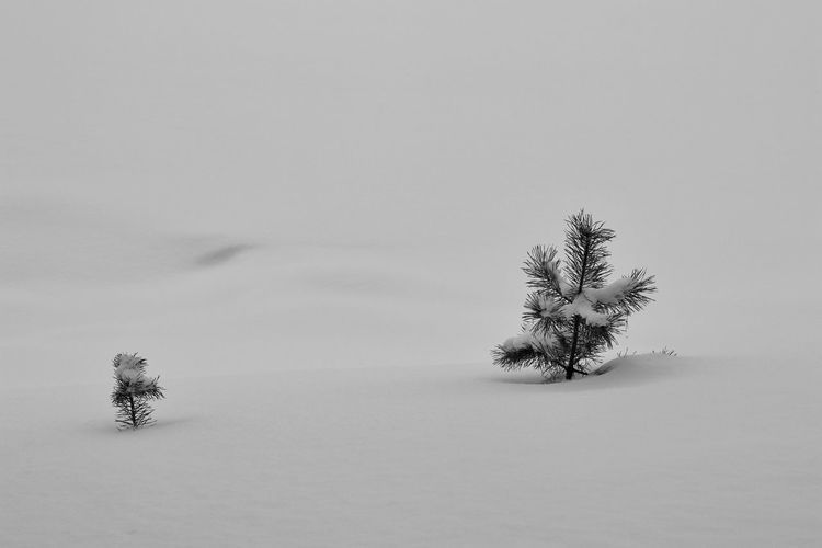 View of tree on snowy field against sky