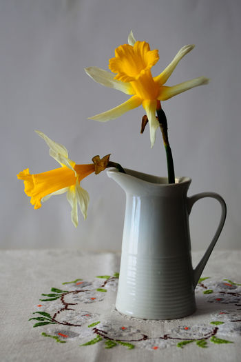 Jarra Beauty In Nature Close-up Cup Flower Flower Head Flowering Plant Fragility Freshness Indoors  Inflorescence Nature No People Petal Pitcher - Jug Plant Still Life Table Vase Vulnerability  White Color Yellow