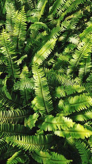 plant Forest Fern Backgrounds Leaf Fern Full Frame Tree Close-up Green Color Green Greenery Grassland Vegetation Foliage Spring Botanical Farmland Leaf Vein Plant Life Natural Pattern Young Plant Growing Plant