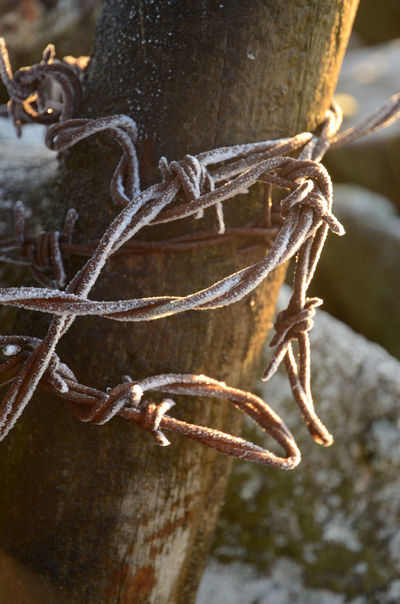 Agriculture Barbed Wire Barbed Wire Close Up Close-up Fence Post Fence Post With Barbed Wire Frost Covered Golden Sunlight