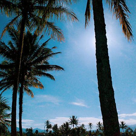 beautiful day. Nature Tree Sky Palm Tree Cloud - Sky Outdoors Beauty In Nature Enjoying Life Taking Photos EyeEm Best Shots Hello World Streetphoto Good Morning World! Thanksgod Likephotografi Beautiful Nature Curupselatan Bengkulu Sumatera INDONESIA