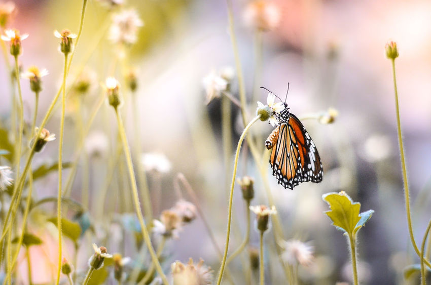 Animal Themes Animals In The Wild Beauty In Nature Close-up Daisy Day Flower Flower Head Focus On Foreground Fragility Freshness Growth In Bloom Insect Nature One Animal Plant Pollination Springtime Summer Symbiotic Relationship Tall Grass Tranquility Wildlife Zoology