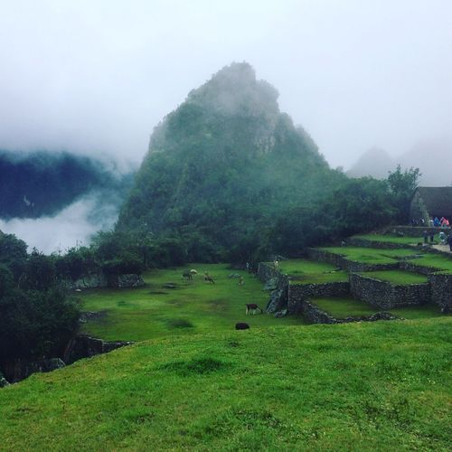 Fog Nature Grass Day Landscape Foggy Tranquility Mountain Green Color Tranquil Scene Outdoors Beauty In Nature No People Ancient Civilization