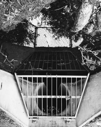 Reflections Artbyriom Daimedam Artisticminds Black And White Photography Streetphotography No People Tree Day Outdoors Reflection Sewer Losangeles Lostangels Agoura Hills