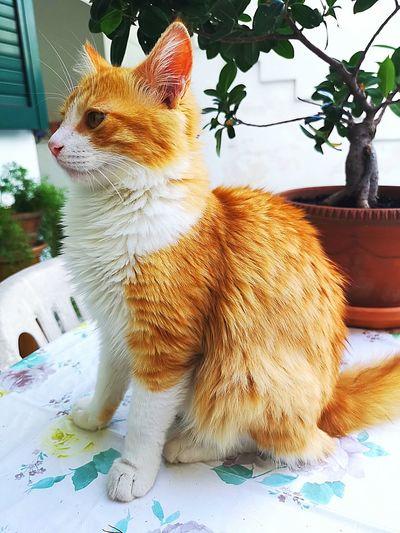 ❤️ Cat Gatto Love Pic Picoftheday Picture Pictureoftheday Photo Photooftheday Photography Catpic Catstagram Instacat Instalike Instaphoto Instapic Instagood Instamoment Lovecat  Tenderlove Beautiful Beautifulcat