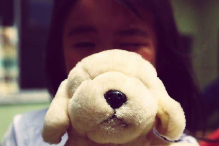 Focus Object Teddy Bear Close-up Portrait Dog Stuffed Toy
