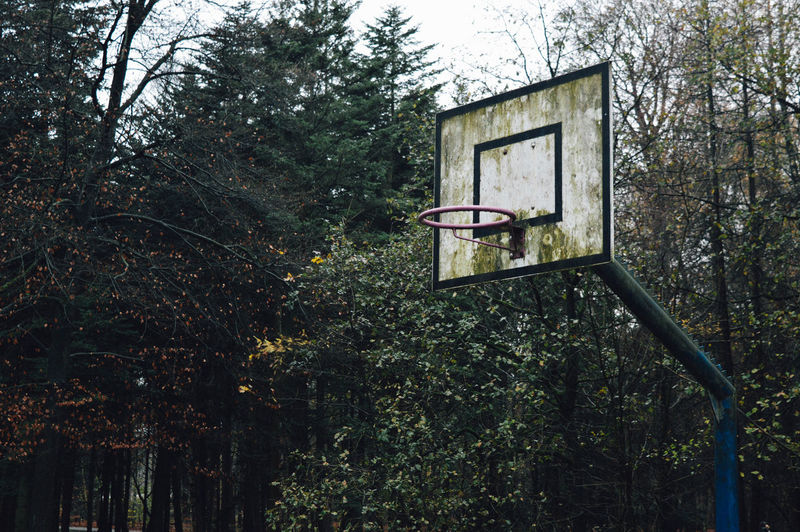 Basketball hoop with trees in background