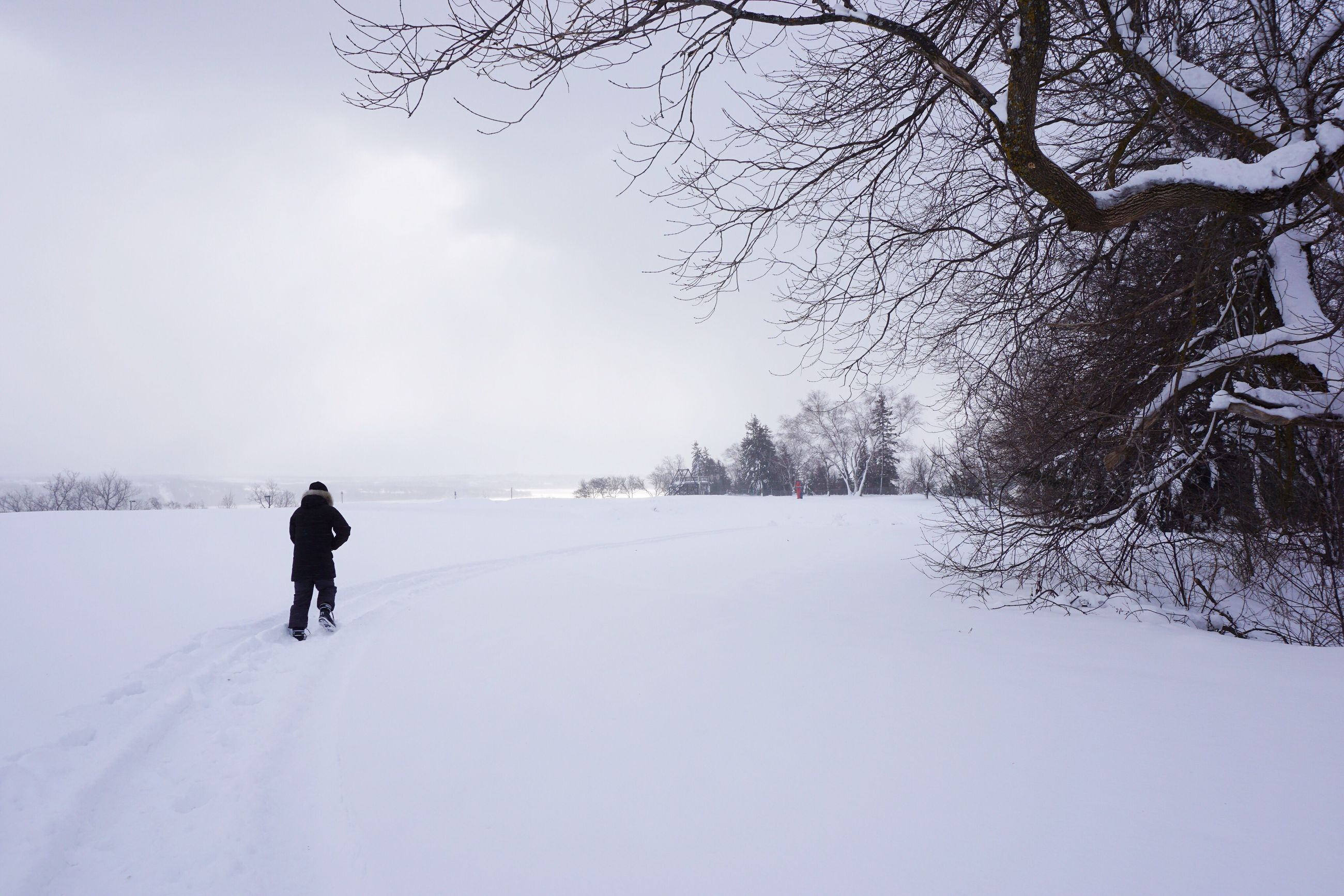 winter, snow, cold temperature, weather, one person, real people, day, sky, nature, leisure activity, outdoors, rear view, beauty in nature, landscape, full length, adventure, tree, scenics