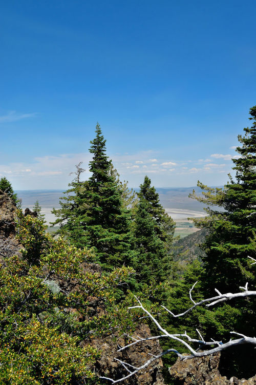 View to the east from the Warner Mountains in Modoc County, California. Beauty In Nature Blue Clouds Day Dead Branches Green Growth Landscape Nature No People Outdoors Pine Trees Plant Sky Tranquility Tree