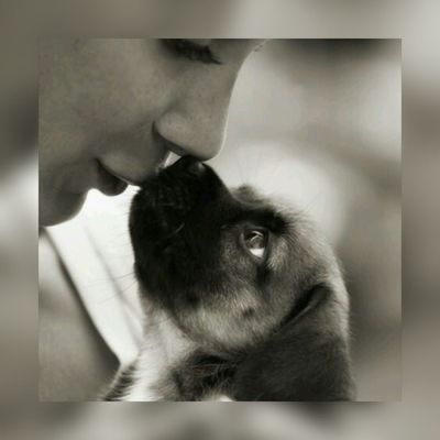 Kiss on the nose ♡ Sweet Things Cute♡ Lovelovelove Live, Love, Laugh Petstagram Puppy Love