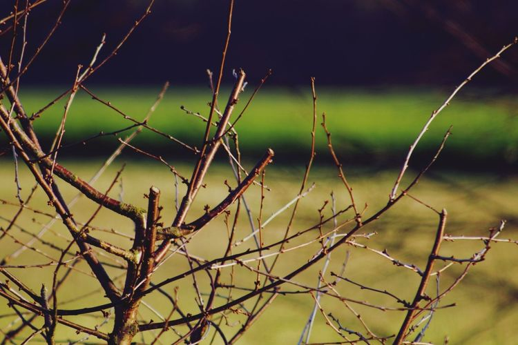 Im Hintergrund ein Raps Feld. No People Nature Outdoors Day Beauty In Nature Close-up EyeEmNewHere