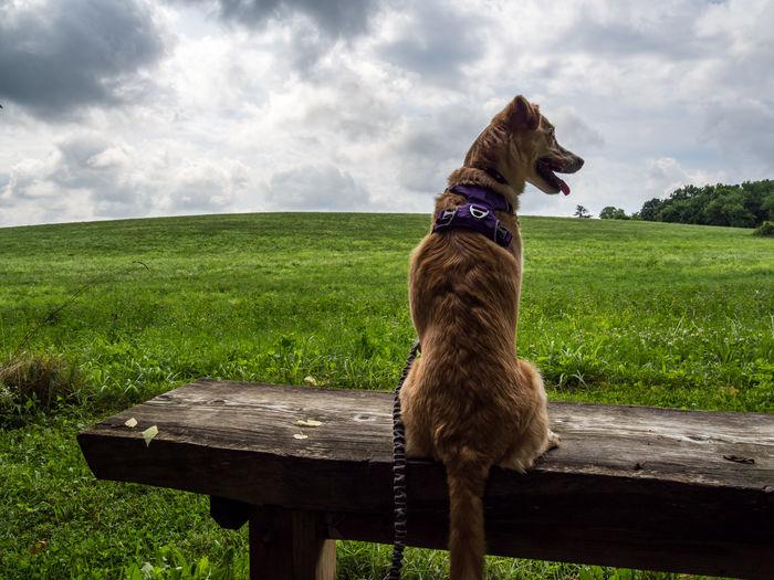 Dog sitting on bench in field