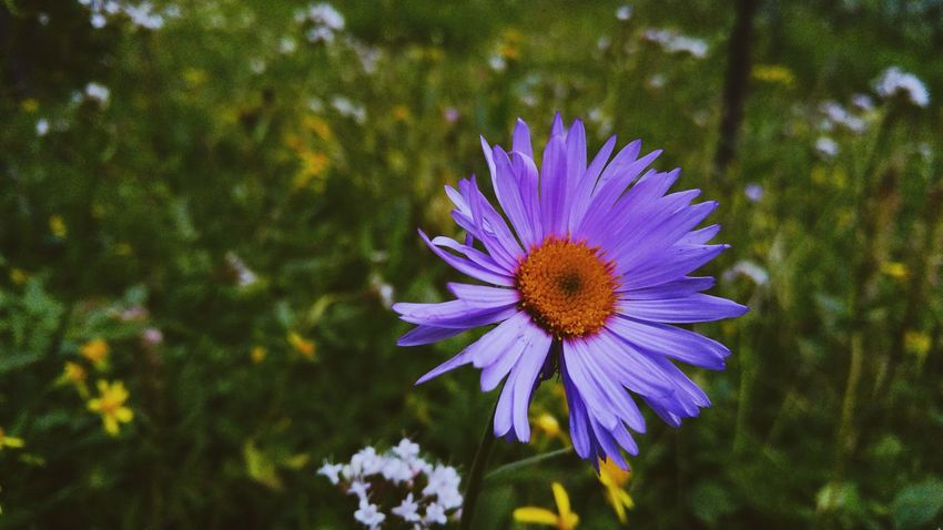 Lovely lone purple flower, this image projects a feeling of sadness and isloation Flower Petal Fragility Beauty In Nature Nature Flower Head Growth Freshness Pollen No People Plant Day Outdoors Purple Blooming Close-up Isolation Loneliness Lonely Sadness And Sorrow Sadness