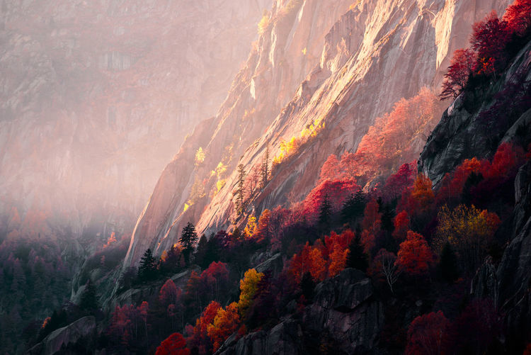High angle view of autumn trees and rocks
