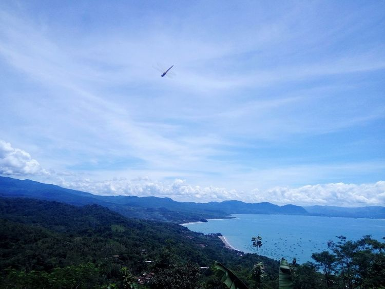the view of pelabuhan ratu Forest Awesome Amazing Cool View Scenery Travel Photography Nature Beautiful Blue Sky Colors Colorful Clouds And Sky Hill Flower Landscape Skies Skyscraper Cloud - Sky Sky Bird Mountain Airplane Tree Air Vehicle Sea Water Mid-air Ski Lift A New Beginning
